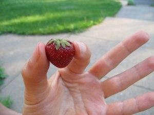 The most perfect strawberry. Ever.